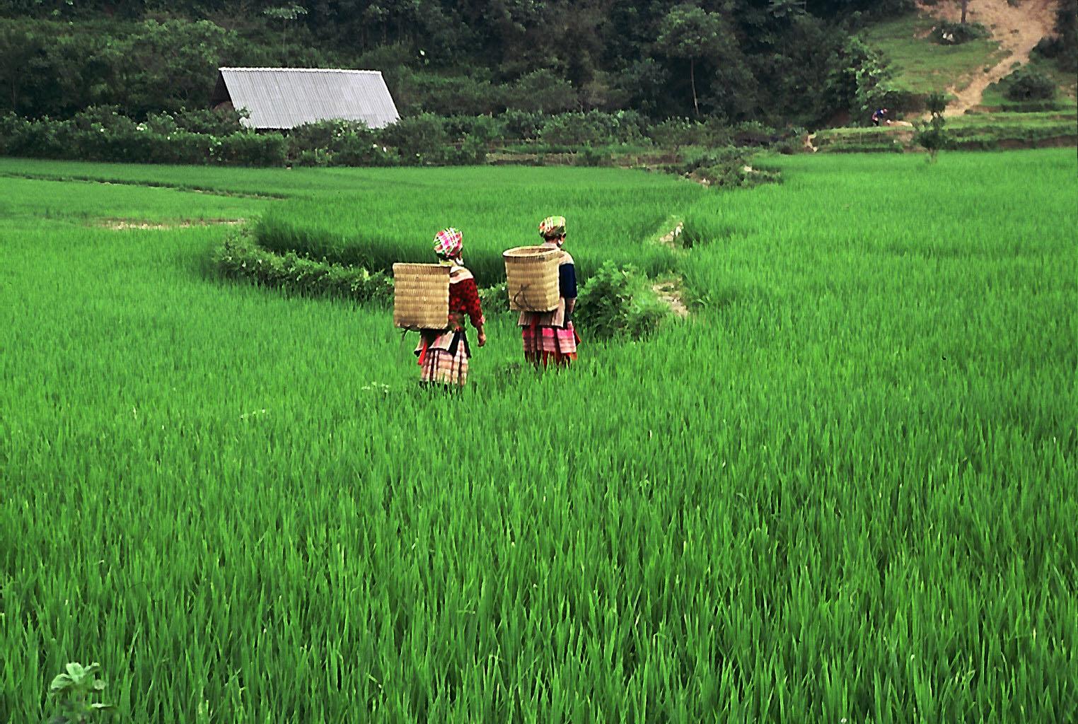 Potovanje po Vietnamu zahteva kar nekaj predpriprav