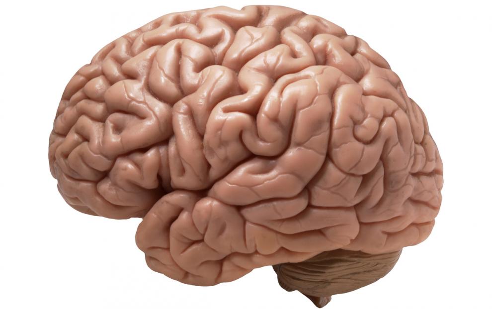 Možgani, takšni in drugačni