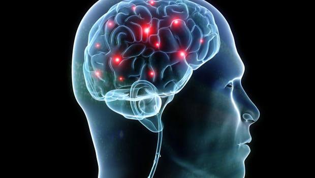 Možgani, organ človeškega telesa