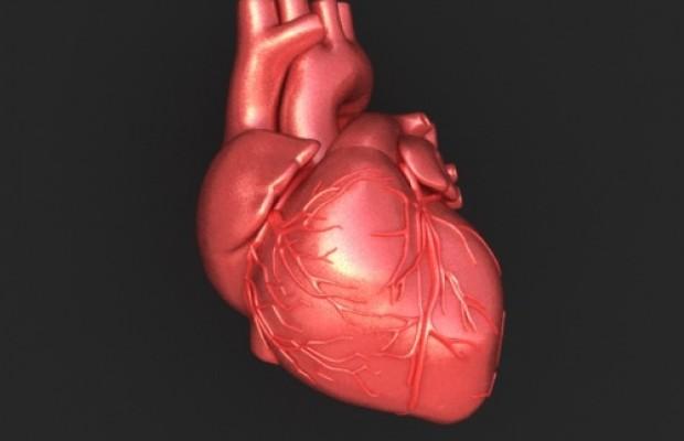 Srce, ritmično utripajoč organ
